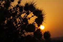 刺灌木日出和剪影  免版税库存图片