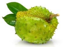 刺番荔枝,多刺的在白色隔绝的南美番荔枝 免版税库存图片