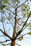 刺结构树 库存照片