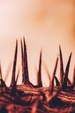 刺钉干燥离开的被放弃的抽象概念 免版税图库摄影