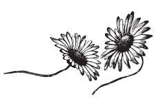 刻记向量的古色古香的雏菊 库存例证