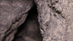 刻赤地下墓穴和漫步的业余性质的洞窟探勘者 影视素材