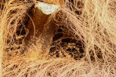 削减一个横渡的棕榈坚硬焦点 免版税库存图片