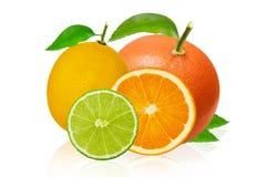 削减切片石灰和柠檬,桔子,在白色背景隔绝的粉红色葡萄柚 库存图片