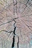 削减杉木日志的纹理 库存图片