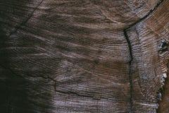 削减树干背景并且构造 被切开的树干木纹理 老木纹理特写镜头视图  抽象纹理和后面 库存图片