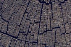削减树桩表面作为背景 库存图片