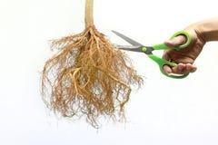 削减装饰树根 免版税库存图片