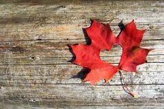 削减重点的槭树叶子 免版税库存图片