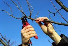 削减08的结构树 免版税图库摄影