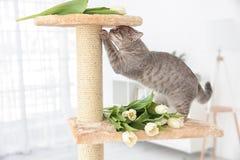 削尖在树的逗人喜爱的猫爪与郁金香 库存图片