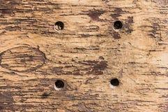 削皮油漆老木墙壁纹理 免版税库存图片
