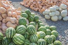 前假日五颜六色的南瓜和西瓜显示在农夫市场上 库存图片
