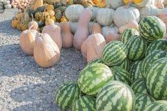 前假日五颜六色的南瓜和西瓜显示在农夫市场上 免版税库存图片