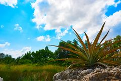 前景的植物在有天空和木头的亚洲在背景柬埔寨风景 免版税库存照片