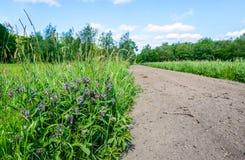 前景的紫罗兰色开花的共同的雏菊植物 免版税图库摄影