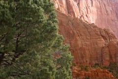 前景针叶树和遥远的砂岩沿La Verkin小河落后, Kolob峡谷,锡安国家公园,犹他 免版税库存照片