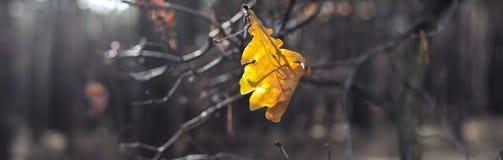 前片黄色叶子在黑暗的秋天森林里 免版税图库摄影
