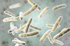 前生命期的细菌,正常小肠微生物群落 库存例证