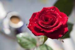 前红色玫瑰色视图 免版税库存照片