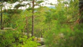 前进向松木森林和山谷 太阳火光在夏日 影视素材