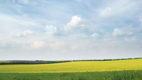 继续前进在黄色油菜籽领域的白色云彩圈蓝天 影视素材