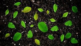 继续前进地面土壤的绿色叶子在无缝的圈的停止运动样式 皇族释放例证