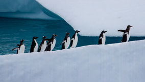 前进的企鹅上升 库存照片