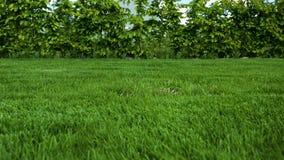 前院美丽的景色私有庭院 有年轻灌木的绿草草坪在周长附近