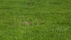前院美丽的景色私有庭院 绿草草坪