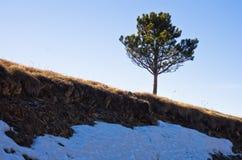 前雪和一棵树在早期的春天,登上Stolovi 免版税库存照片