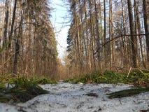 前雪在森林里 免版税库存图片