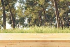 前面土气木委员会的树图象和背景在森林里 免版税库存图片