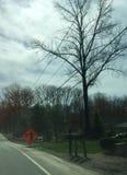 前面道路工程和野生鸢尾花 库存照片
