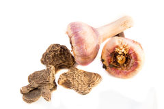 剑兰电灯泡和银莲花属种子 库存图片