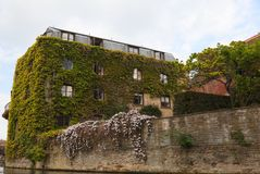 剑桥学院常春藤一英国墙壁 免版税库存照片