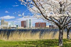剑桥,马萨诸塞 免版税库存照片