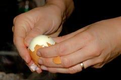 剥一个煮沸的鸡蛋 免版税库存照片