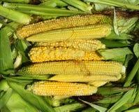 剥壳的玉米 库存图片