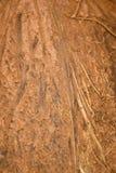 剥椰子作为背景 2009朵超级花宏观的夏天 图库摄影