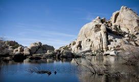 剥皮器水坝约书亚国家公园结构树 库存照片