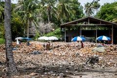 剥从农场的泰国本地工人许多椰子海岛酸值Phangan堆的有矛头刀子的坚果 免版税库存图片