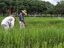 剧情的研究员与甘蔗 免版税库存图片