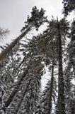 剧烈的冬天剪影树 库存照片