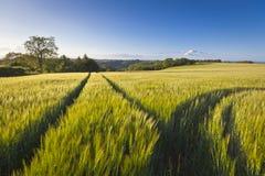 剧烈的天空,田园诗农村风景, Cotswolds英国 库存图片
