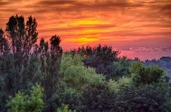 剧烈的日落和绿色forrest 库存图片