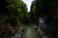 剧烈的河谷峡谷标示用树在提洛尔,奥地利 免版税库存照片