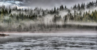 剧烈的雾在沿湖的森林里 图库摄影
