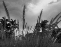 剧烈的黑白植物 免版税库存照片