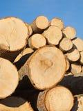 剪切新鲜的木头 免版税库存照片